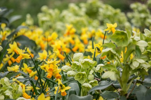Le Parc Floral de La Source devient gratuit 9