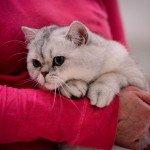 Quelques images de l'Exposition annuelle du chat qui se tient tout ce week-end au Parc des Expositions d'Orléans. 6