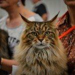 Quelques images de l'Exposition annuelle du chat qui se tient tout ce week-end au Parc des Expositions d'Orléans. 5