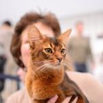 Quelques photos du 2eme jour de l'Exposition Internationale du Chat 2013 à Orléans 1