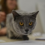 Quelques photos du 2eme jour de l'Exposition Internationale du Chat 2013 à Orléans 5
