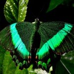 Quelques photos (macros) prises à la serre aux papillons au parc floral de la Source 10