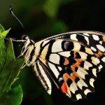 Quelques photos (macros) prises à la serre aux papillons au parc floral de la Source 1