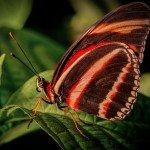 Quelques photos (macros) prises à la serre aux papillons au parc floral de la Source 2