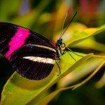 Quelques photos (macros) prises à la serre aux papillons au parc floral de la Source 3