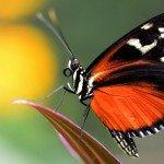 Quelques photos (macros) prises à la serre aux papillons au parc floral de la Source 4