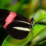 Quelques photos (macros) prises à la serre aux papillons au parc floral de la Source 6