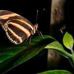 Quelques photos (macros) prises à la serre aux papillons au parc floral de la Source 7