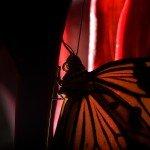 Quelques photos (macros) prises à la serre aux papillons au parc floral de la Source 8