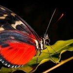 Quelques photos (macros) prises à la serre aux papillons au parc floral de la Source 9