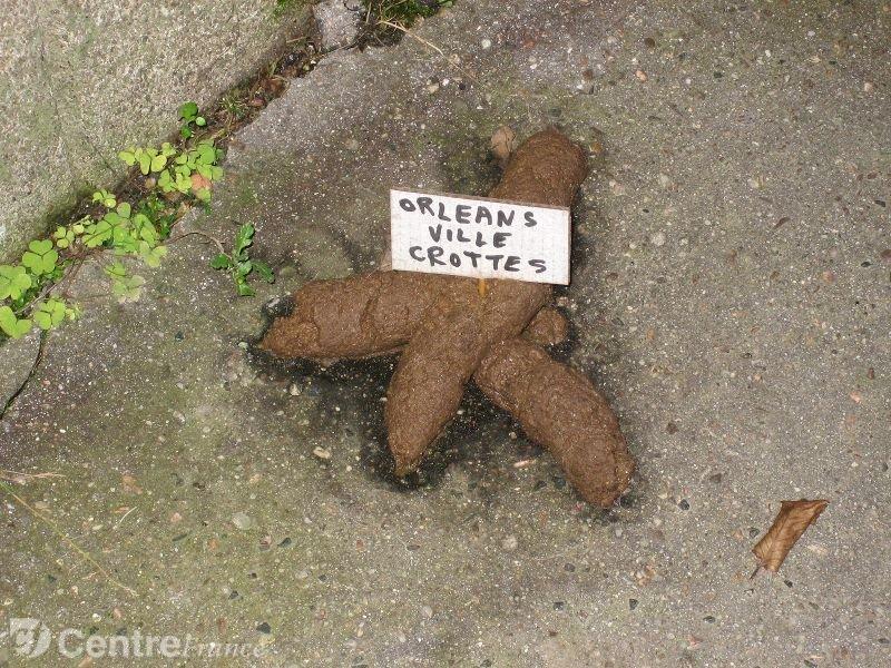 Orl ans ville crottes pour info orl ans - Que faire des crottes de chien dans son jardin ...