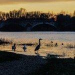 Magnifique coucher de soleil ce soir sur Orléans 4