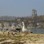 Cet après-midi sur la digue à Orléans … 1