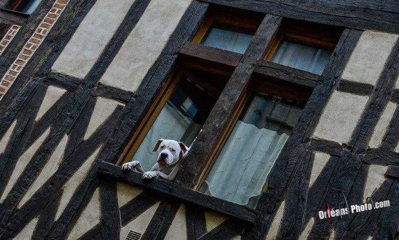 La rue de Bourgogne est sous surveillance étroite 1