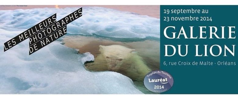 Wildlife Photographer of the Year 2013 à la Galerie du Lion 1