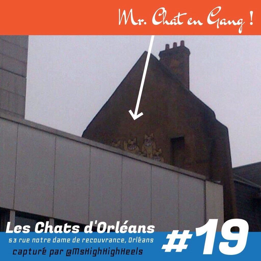 Mr Chat et son gang sur les toits d'orléans