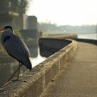 Être matinal pour le canal... 3
