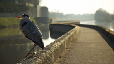 Photo de Être matinal pour le canal…