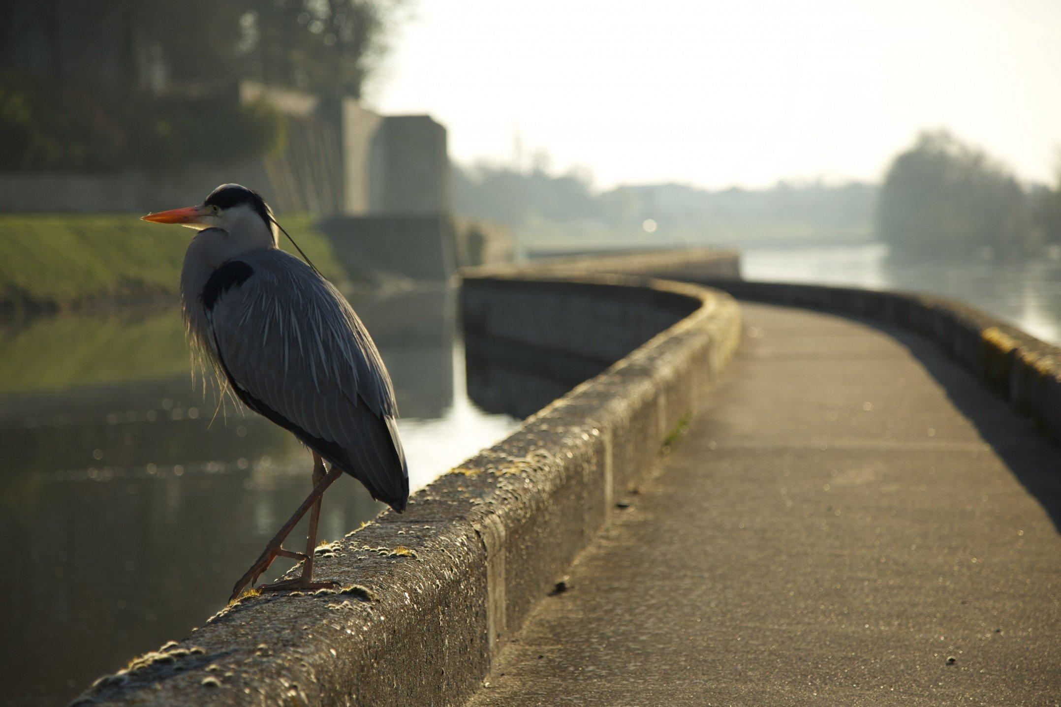 Être matinal pour le canal... 2