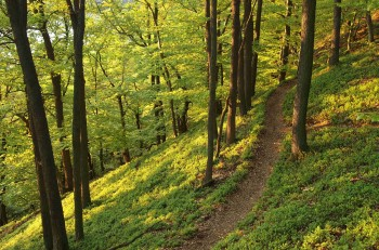 Trail Saint-Cyr en Val 2015