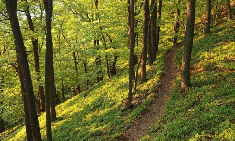 Le Trail des Châteaux à Saint-Cyr-en-Val ! 1