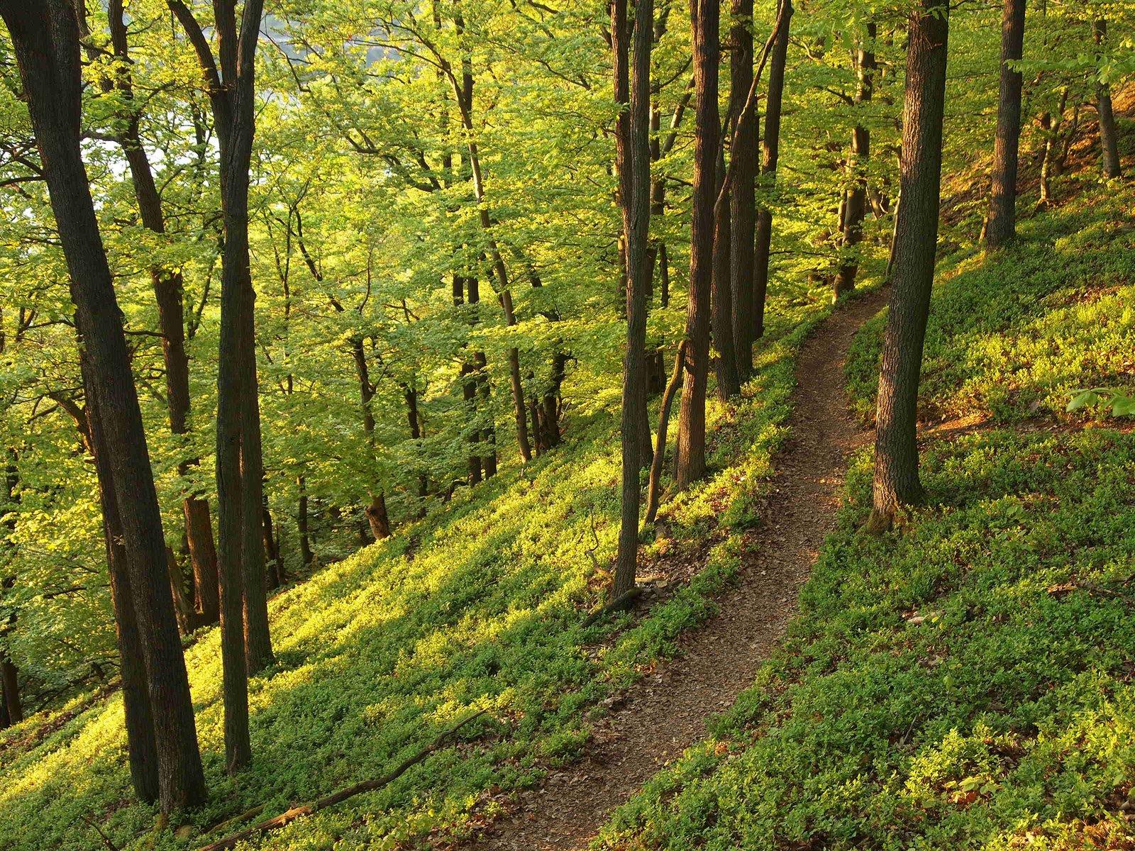 Le Trail des Châteaux à Saint-Cyr-en-Val ! 11