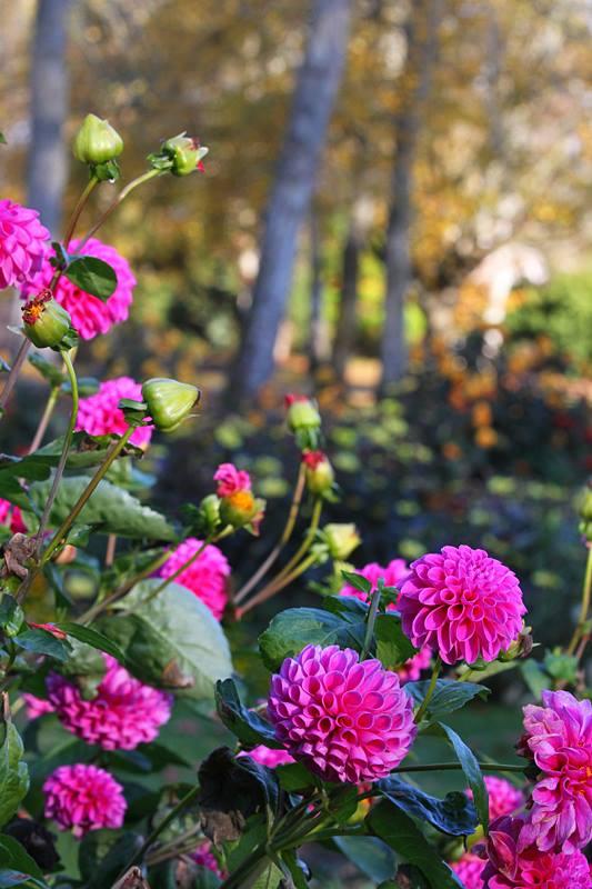 Profitez du Parc Floral de La Source gratuitement 1