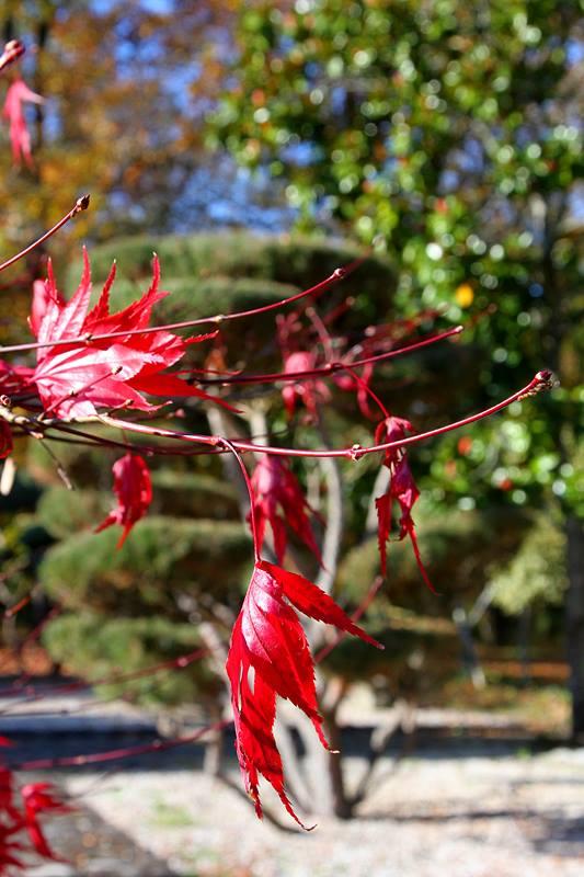 photo parc floral orléans la source f grelet (1)