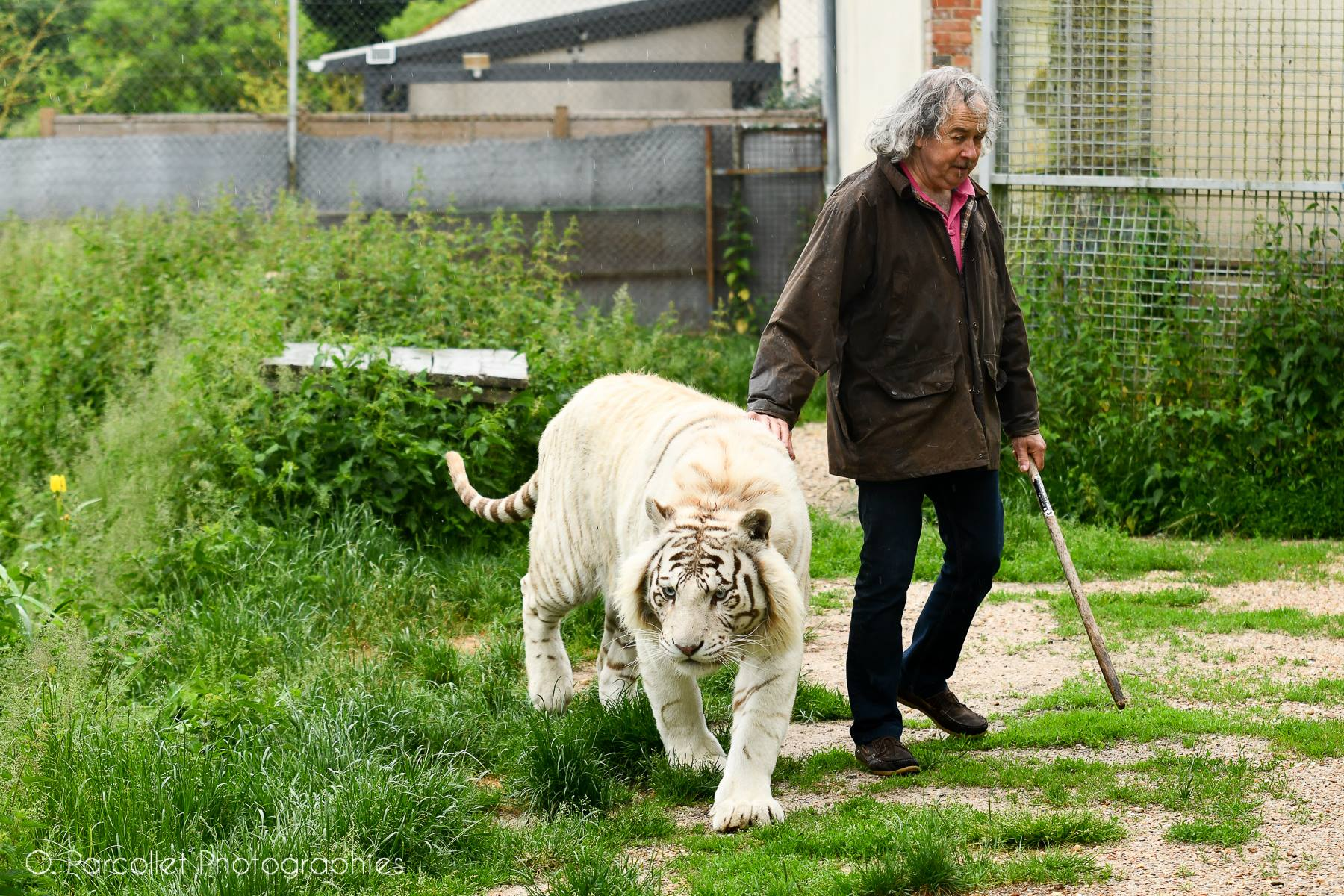 On a rencontré Rémy Demantes et ses tigres 4