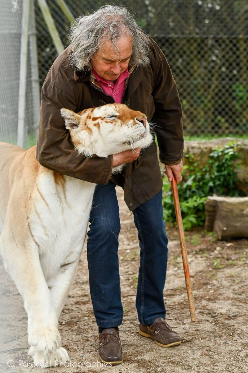 On a rencontré Rémy Demantes et ses tigres 6