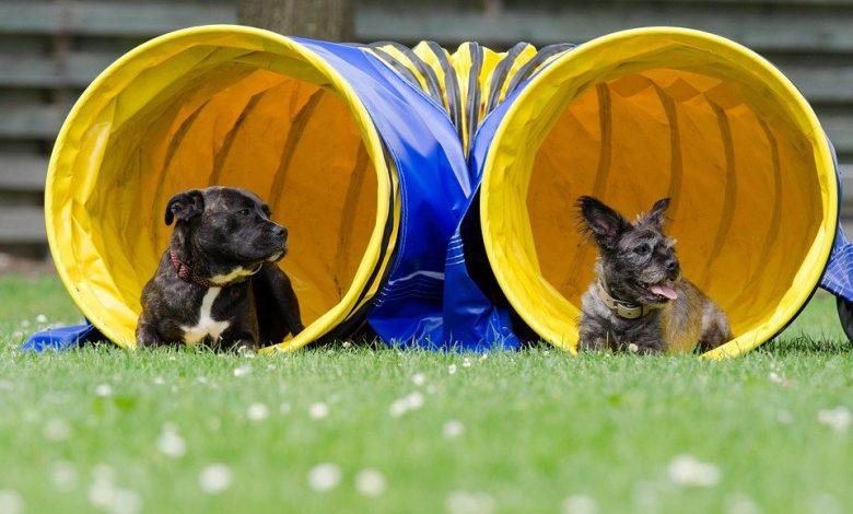 Un parc de jeux réservés pour les chiens à Orléans 1