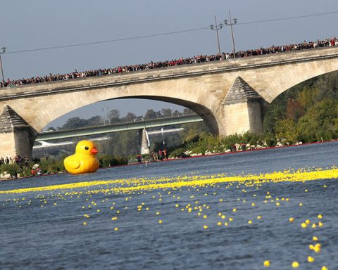 35 000 canards au départ de la DUCK RACE 2019 ! 7