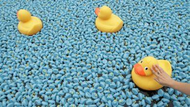 Photo of Les canards de la Duck Race seront …