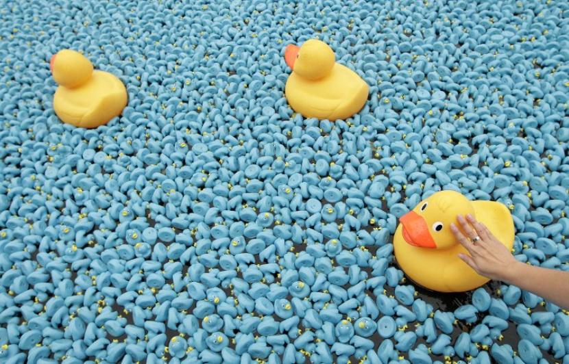 Les canards de la Duck Race seront ... 1