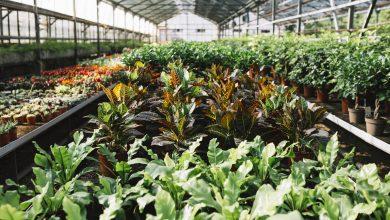 Photo of Localiser les horticulteurs et pépiniéristes du Loiret en vente directe