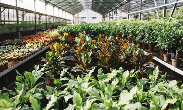 Localiser les horticulteurs et pépiniéristes du Loiret en vente directe 1