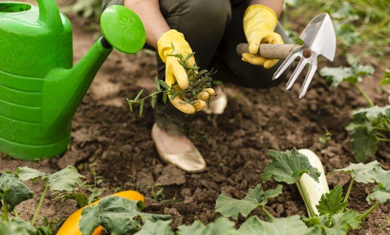 Ce week-end, découvrez les secrets du jardin au naturel 1