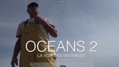Photo de Océans 2 aux Carmes: l'algue qui cache la forêt