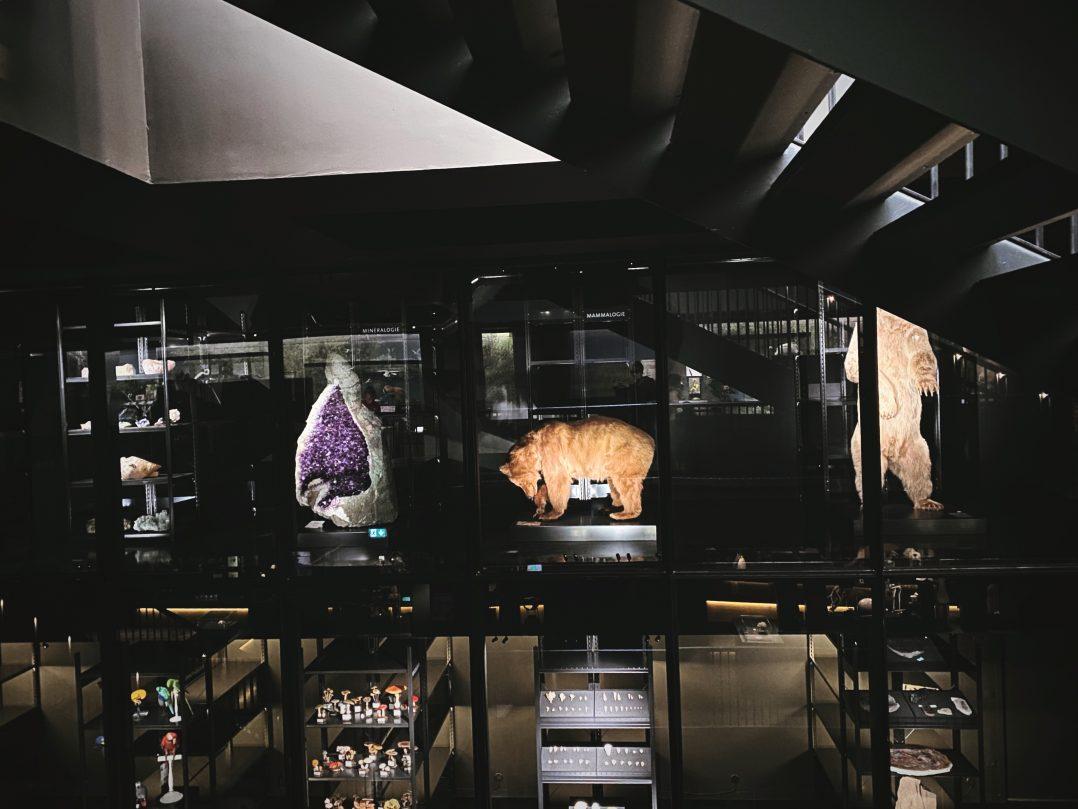 MOBE - MUSÉUM D'ORLÉANS POUR LA BIODIVERSITÉ ET L'ENVIRONNEMENT 12
