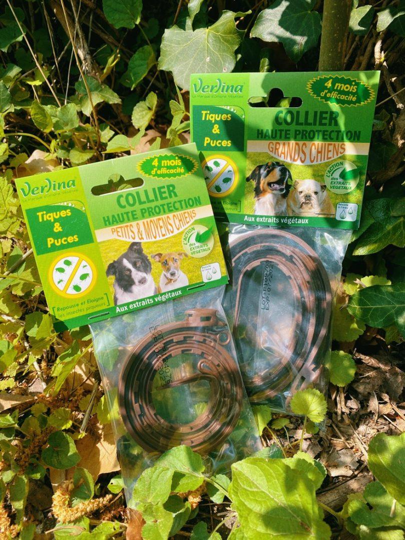 CROCS GOURMANDS : Une alimentation saine qui prend soin des chiens et des chats 8